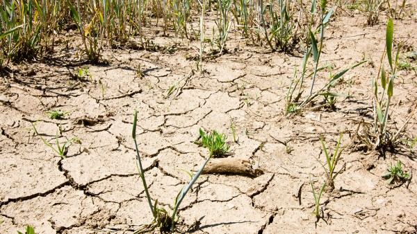 Megatrend: climate change